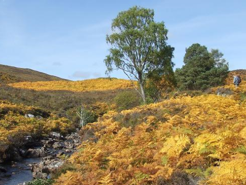 A peaty stream on the Dundreggan estate, in a largely treeless landscape. Photo: Philip Mason.