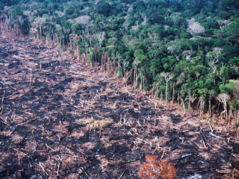 Another forest is burnt to make way for the ever-expanding soy frontier.