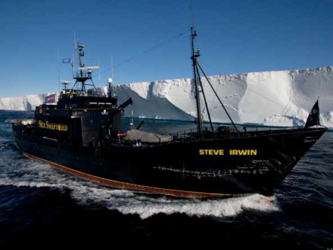 Flagship Steve Irwin in front of the Ross Ice Shelf, with the damage from the collision to the right. Photo © Andy Lau.