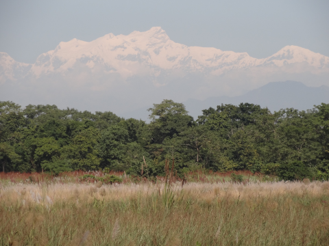 View from an opening in the forest in the Chitwan National Park to the eternal snows of the Himalayas. Photo: ALERT-conservation.org.