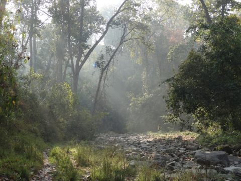 A wild stream through the forest in the Chitwan National Park. Photo: ALERT-conservation.org.