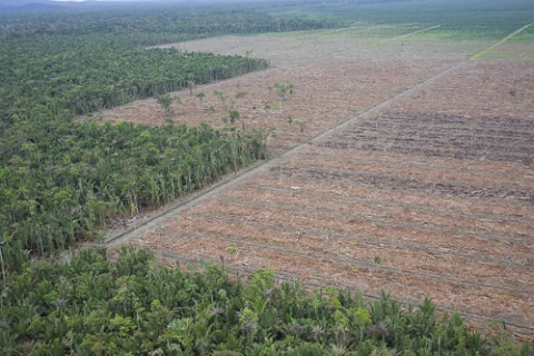Lowland rainforest in West Papua logged for its timber, and cleared for palm oil plantation.