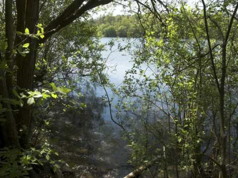 Brede High Woods - ancient woodland and lake. Photo: Woodland Trust.