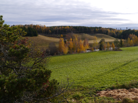 A valley in Norway. The HPG land on the near side had twice the productivity of the conventionally managed land across the valley. Photo: Anders Lerberg Kopstad.
