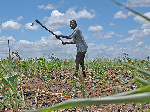 Joao, a small farmer in Mozambique, hoeing his maize field. Photo: Kate Raisz / Bread for the World via Flickr.com.