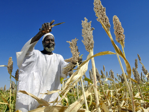 A Sudanese farmer tends his sorghum crop. Photo: Africa Renewal via Flickr.com.