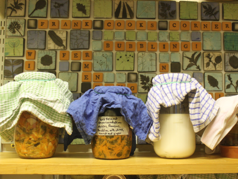 Jars gently bubbling in the 'fermentation corner'. Photo; Joanna Wright.