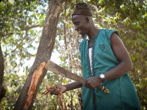 Bakari Jallou working in the forest. Photo: Jason Florio / Concern Universal.