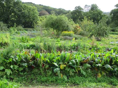 Embercombe's mixed vegetable, flower, and herb garden, with fruit trees surrounding, at abundant summer's end.
