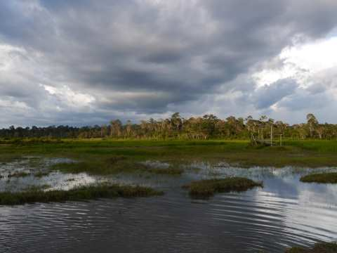 Prey Long forest, Cambodia, from the Choam Svay watershed. Photo: Fran Lambrick.