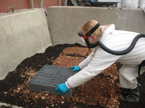 Bark chips being prepared as a growing medium for White rot fungus. Photo: Aalto University.