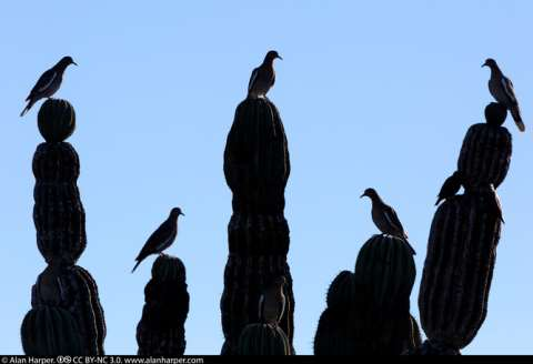 It's all right, they're not vultures (that's the birds, not the developers). Alan Harper, CC BY-NC.