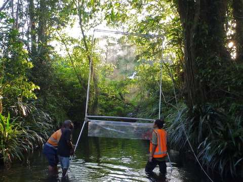 Catherine Hughes setting up a trap in a creek line with help from forestry staff. Photo: Julie Broken-Brow.