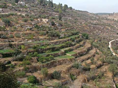 A terraced valley at Battir. Photo: via Common Dreams.