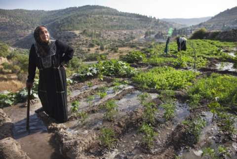 A Palestinian farmer at work at Battir. Photo: via Common Dreams.
