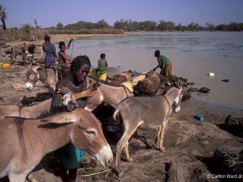 Local people and their animals at Lake Banzena. Photo: Carlton Ward Jr.  / carltonward.com.