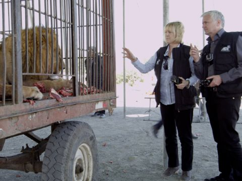 Jan and Tim examine lions kept behind bars in a 'beastwagon'. Photo: ADI.