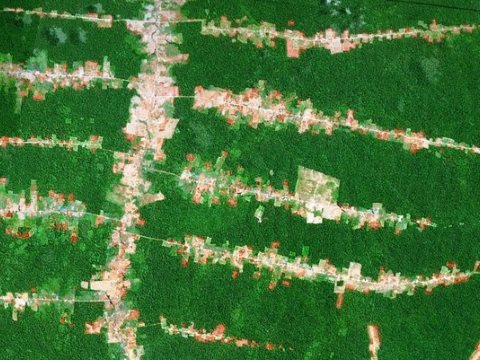 Deforestation associated with forest roads in Roraima in the southern Brazilian Amazon. Image: Google Earth.