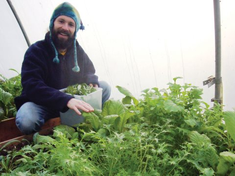 Harvesting winter salad. Photo: Bethan Stagg.