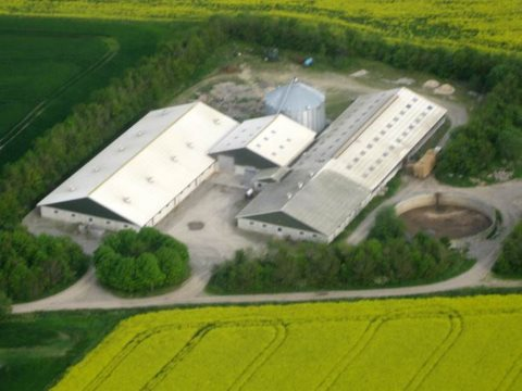 Pilegaarden, or Willow Farm, where Ib Borup Pedersen raises pigs and conducts his research. Image: Ib Borup Pedersen.