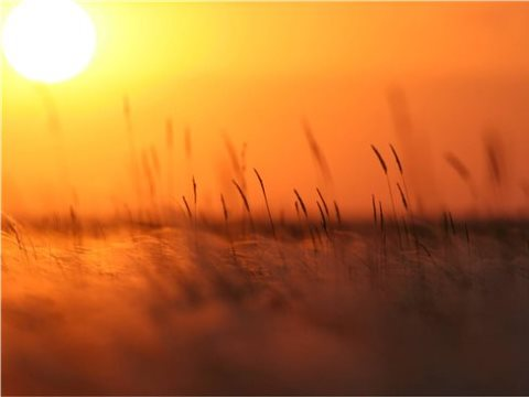 Sun shining through the grass on the 'Golden Steppe'. Photo: Stephanie Ward / Geoff Welch.