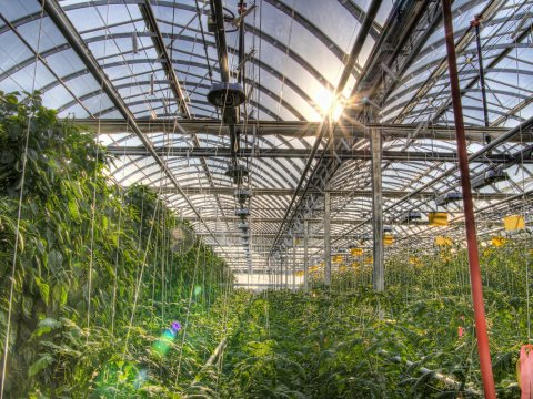 Inside Lufa's rooftop farm in Montreal. Photo: Lufa Farms.