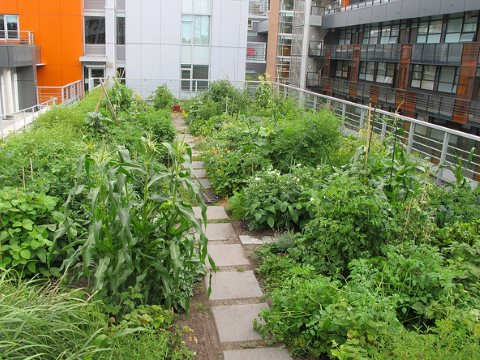 A productive rooftop garden in London. Photo: Christopher Porter via Flickr.