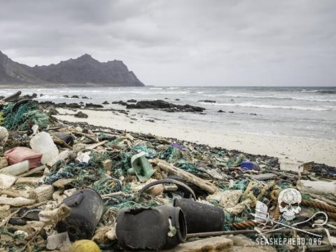 The garbage that builds up incessantly on the Praia de Achados beach presents formidable obstacle to loggerhead turtles seeking nesting sites. Photo: Simon Ager / Sea Shepherd.