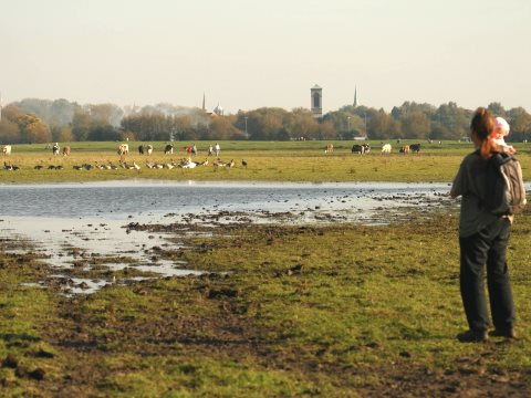 Before: the view from Port Meadow across to the tower of St Barnabas church and more distant 'dreaming spires' in 2008. Photo: Save Port Meadow.