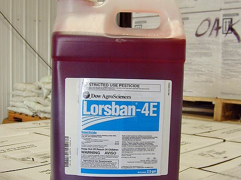 Lorsban is a formulation of the teratogenic pesticide chlorpyrifos. Even minute exposures affecting pregnant women can cause severe birth defects. Photo: Pacific Northwest Agricultural Safety and Health Center via Flickr.