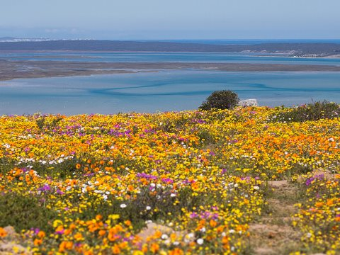 Spring at Langebaan Lagoon. Beautiful ... but where did all the people go? Photo: Kobus Smit via Flickr.