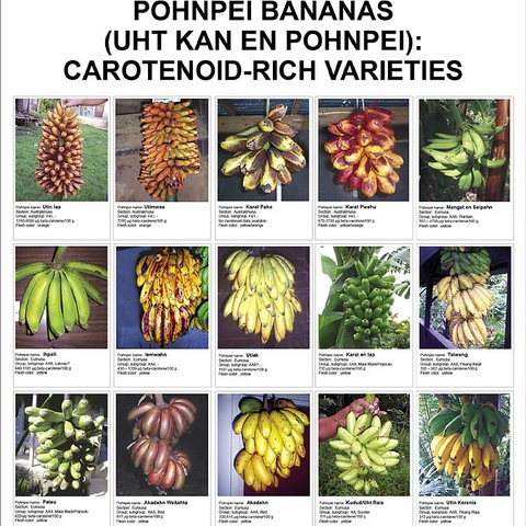 Pohnpei bananas - carotenoid-rich varieties poster. Photo: Island Food Community of Pohnpei via Flickr.