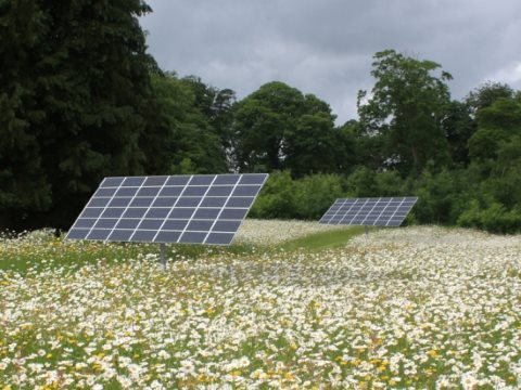 Bumblebees especially like to nest in the dry areas beneath solar panels - especially when surrounded by wild flowers. Photo: Wildflower Turf.