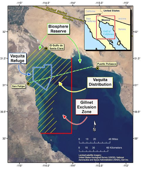 Map showing the existing and proposed new protected areas for the vaquita in the Gulf of California. Image: from vaquita.tv.