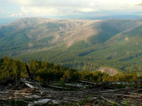 Logging has left Victoria's mountain ash forests in danger of collapse. Photo: David Blair, Author provided.