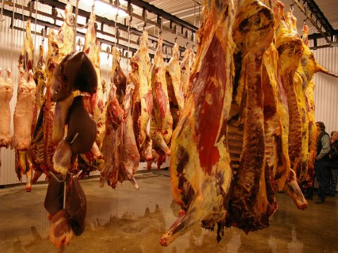 Meat hanging in a typical British slaughterhouse. Photo: CIWF.