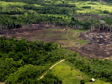 AIDESEP: 'Illegal deforestation kills indigenous people, Amazonia and all our lives'.