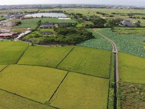 These fertile fields are at risk of industrialisation for the Taoyuan Aerotropolis.