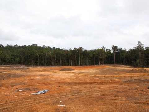 Where did all the wood go? Former forest cleared for plantation by PT Prasetya, July 2014. Photo: EIA.