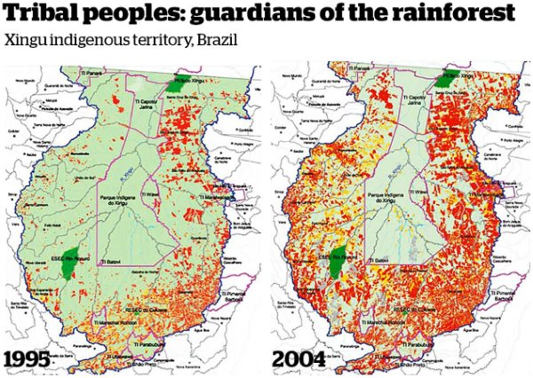 Maps of the Xingu regions showing the powerful protective effect of indigenous forest ownership. Image: Survival International.