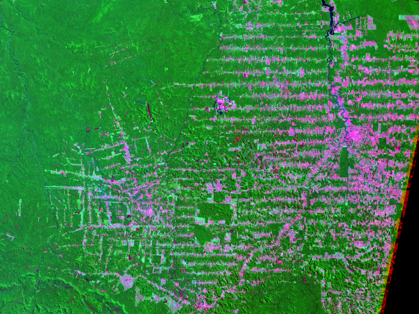 A 2001 Landsat image of Rondonia, Brazil, showing how the building of roads enables the spread of deforestation deep into the Amazon in the characteritic 'herring bone' pattern. Photo: USGS.