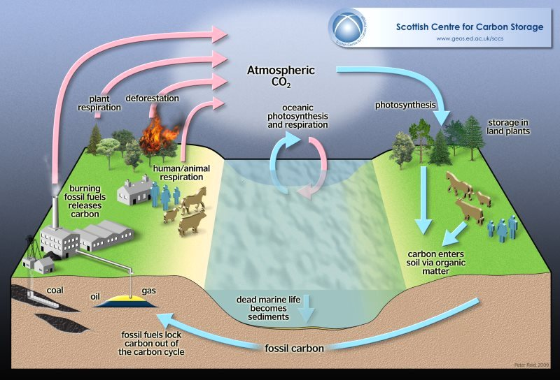 The Amazon is a big part of Earth's carbon cycle. Image: Peter Reid / Scottish Centre for Carbon Storage (CC BY).