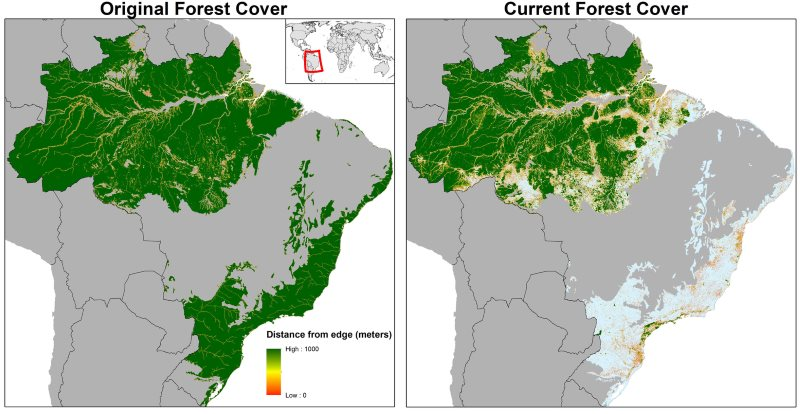 Large patches of the Amazon remain, but Brazil's Atlantic forest is rarely more than 1km from an edge. Map: Clinton Jenkins.
