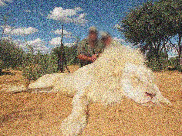 Proud hunters crouching over their kill in a 'canned' lion hunt.