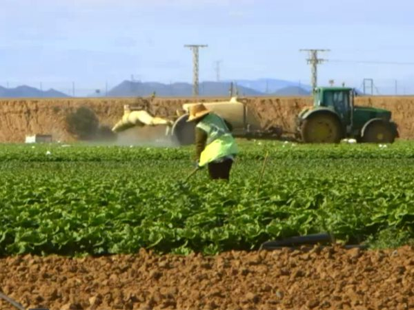 A farm worker caught in pesticide spray. Photo: Ecologist Film Unit / Channel 4 News.