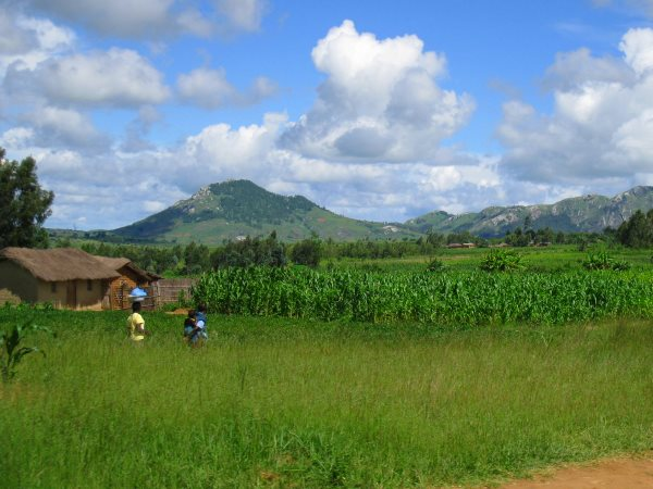 A small farm in Malawi. Photo: Marc Crouch / NAV.