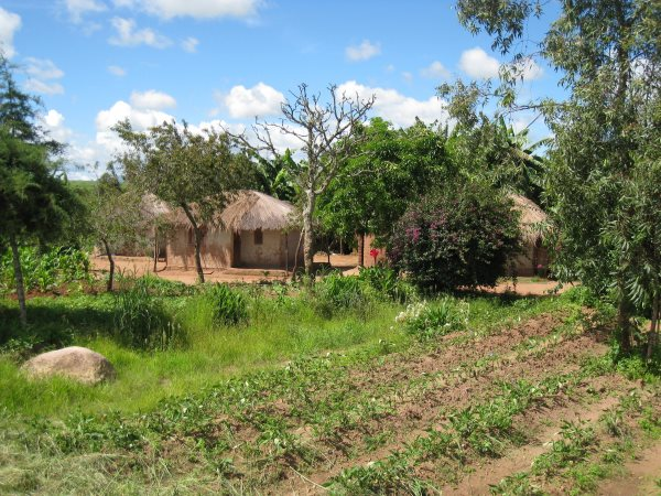 A small farm in rural Malawi. Photo: Marc Crouch / NAV.