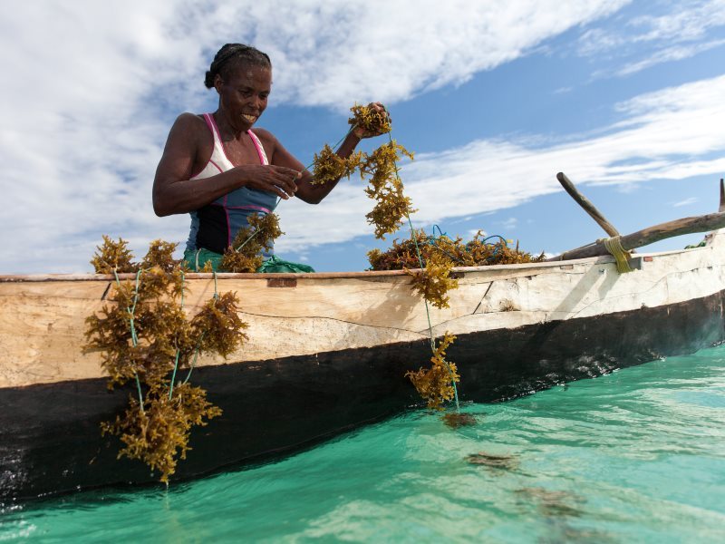 A seaweed farmer tends to her crop. Seaweed is widely used in the food and cosmetics industries, and provides an alternative income for local fishing communities - Ambatamilo, Madagascar. Photo: Garth Cripps / Blue Ventures.