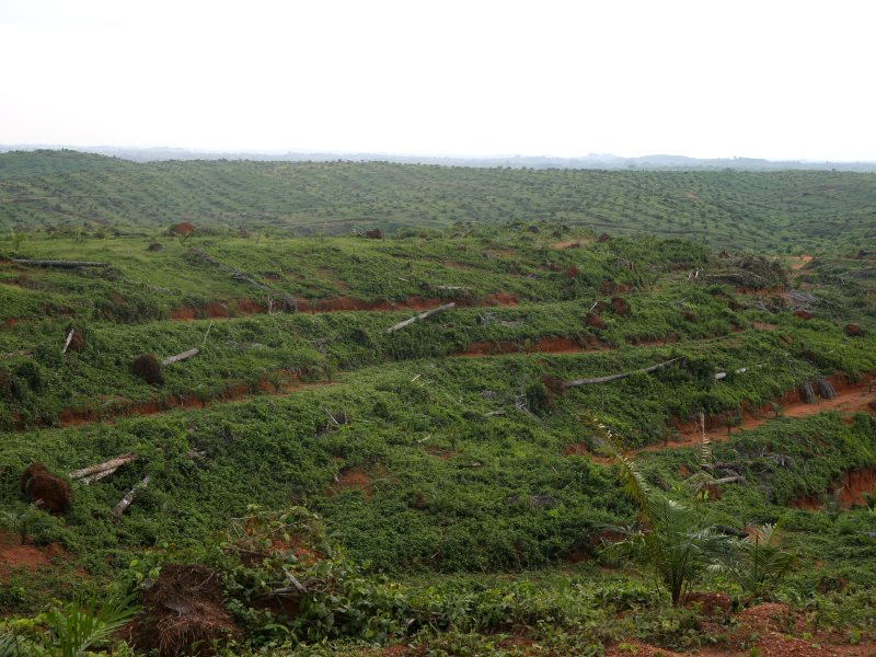 Wilmar's Mbarakom oil palm plantation in Nigeria, reaching to the horizon. Photo: FOEI / ERA.