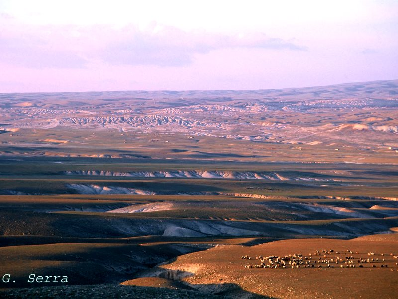 View of the steppe in the surroundings of Palmyra (Tadmur) during period 2001-2002. Photo: Gianluca Serra.